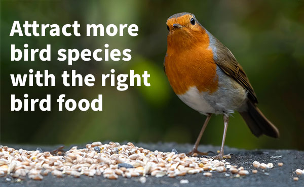 Attract More Bird Species With the Right Bird Food