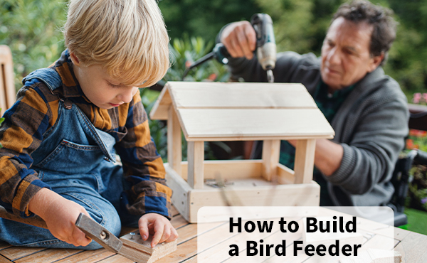 5 of the Most Popular Types of Bird Feeders to Build